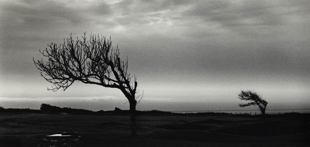 Two Trees - Normandy Series